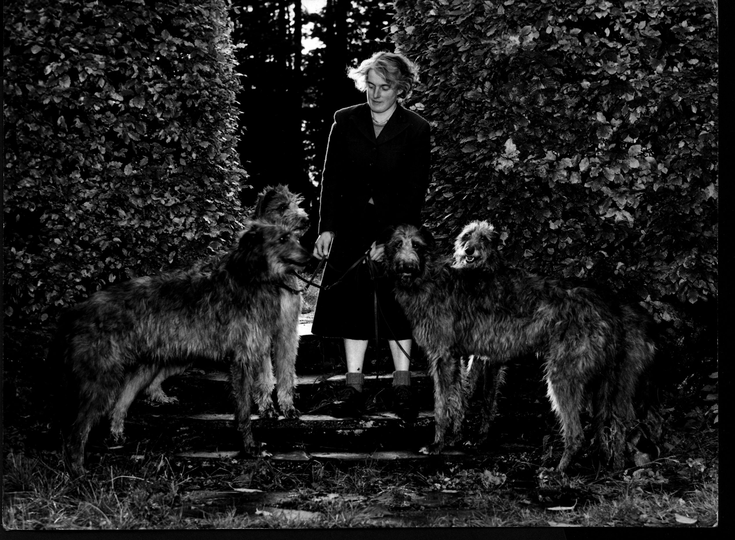 1954 picture of, from left to right Ch. Monarch of Ardkinglas b. 1945 Timber Wolf of Twinkling x Aphra Dubh Nicola of Ardkinglas b. 1952 Ch. Louis of Ardkinglas x Kirsty of Ardkinglas Ch. Lydia of Ardkinglas b. 1950 Ch. Monarch of Ardkinglas x Enterkine Miranda Ch. Ardkinglas Rauri of Portsonochan b. 1952 Ch. Louis of Ardkinglas x Enterkine Belinda