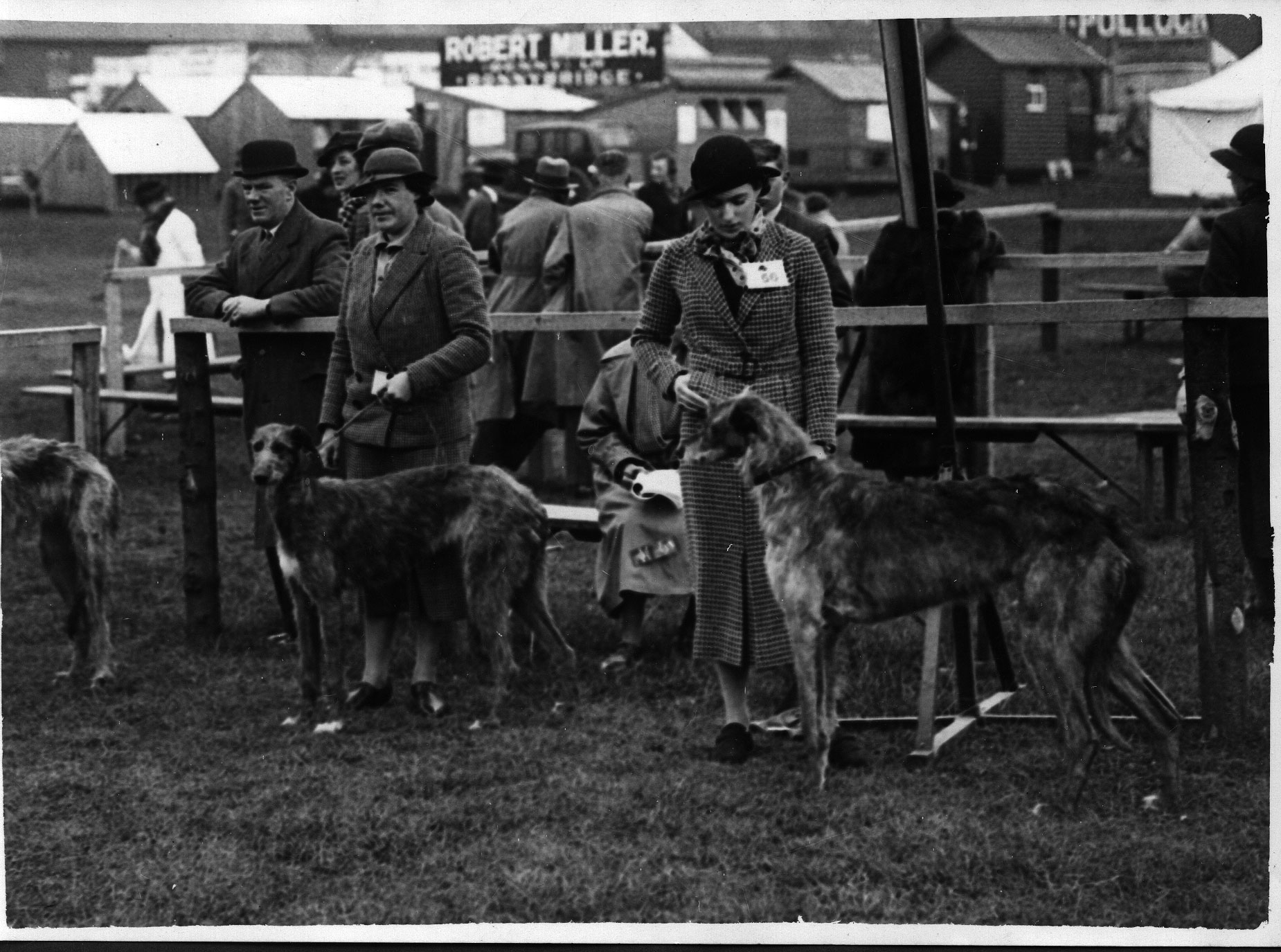 Ayr show, 1936 Nora of Enterkine, b. 1930 Glenmoristan Bruce x Fiona of Enterkine