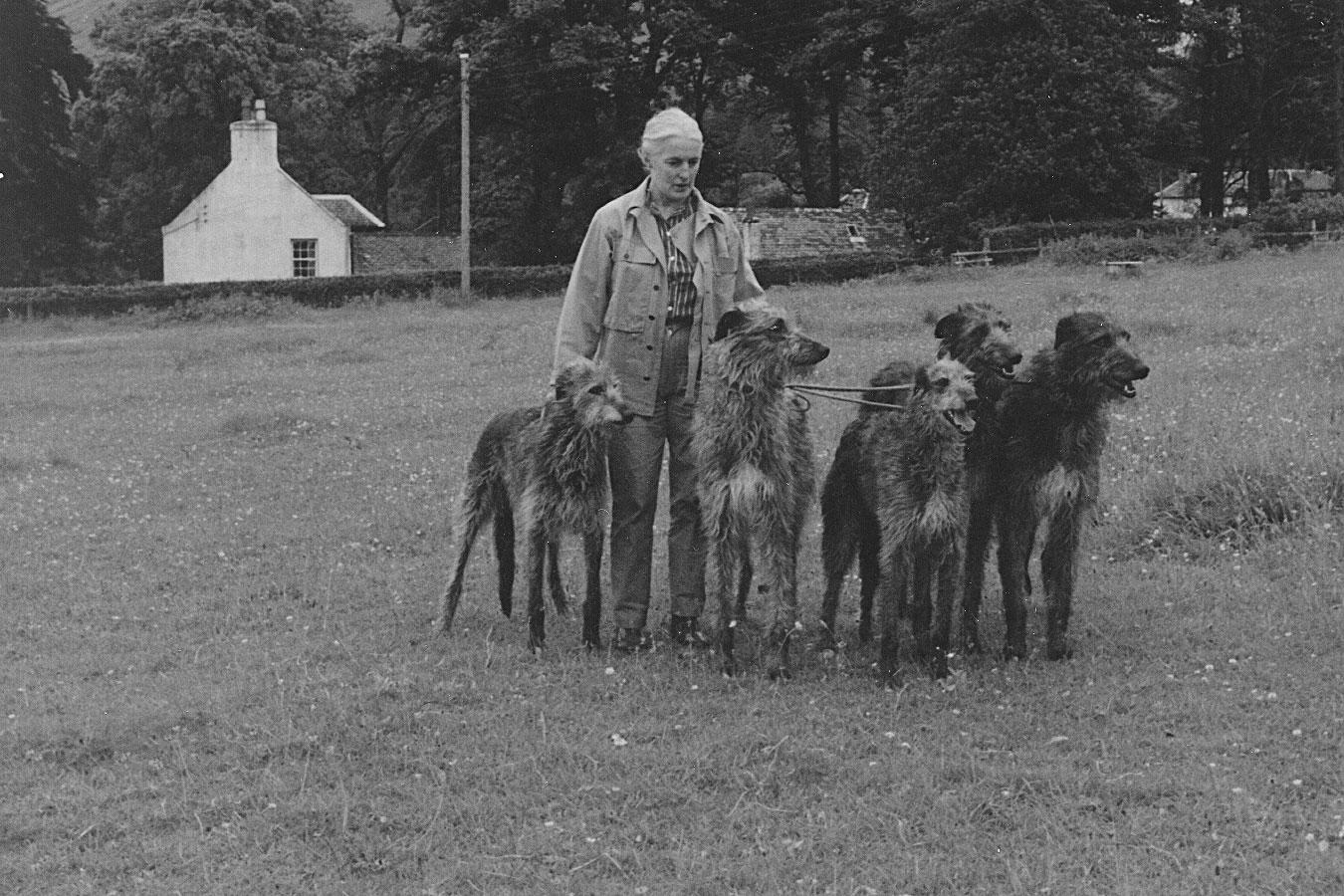 1968 photo of Ch. Wilhelmina of Ardkinglas (b. 1957, Ulric of Ardkinglas x Ch. Stella of Ardkinglas), Kevin of Ardkinglas (b. 1965, Juniper of Ardkinglas x Anina of Kylewood), Ailsa of Orbost (b. 1963, Ch. Fitzroy of Ardkinglas x Morag of Craigencuilean),  Ch. Nadia of Ardkinglas (b. 1964, Bosun of Geltsdale x Ch. Aurora of Ardkinglas Juniper of Ardkinglas, b. 1963 Ch. Fitzroy of Ardkinglas x Ch. Stella of Ardkinglas)