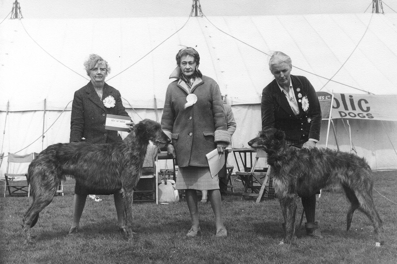 Bath Championship Show, 1965 Miss Hartley with Ch. Garry of Rotherwood (b. 1963 Gorm of Cockalorum x Churchwall's Fern), judge Mrs. Creasy, Miss Noble with Hughina of Ardkinglas (b. 1962 Ch. Fitzroy of Ardkinglas x Ch. Wilhelmina of Ardkinglas